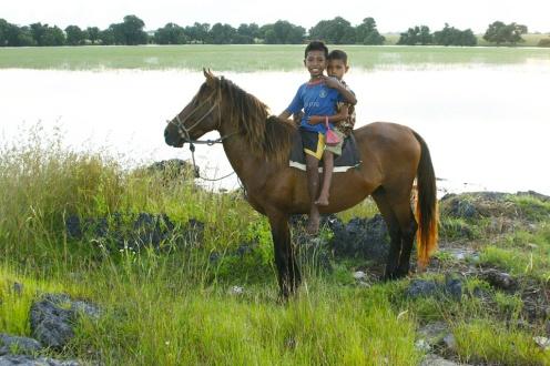 Sumba Horsey